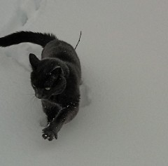 Harvey stalking in the Snow