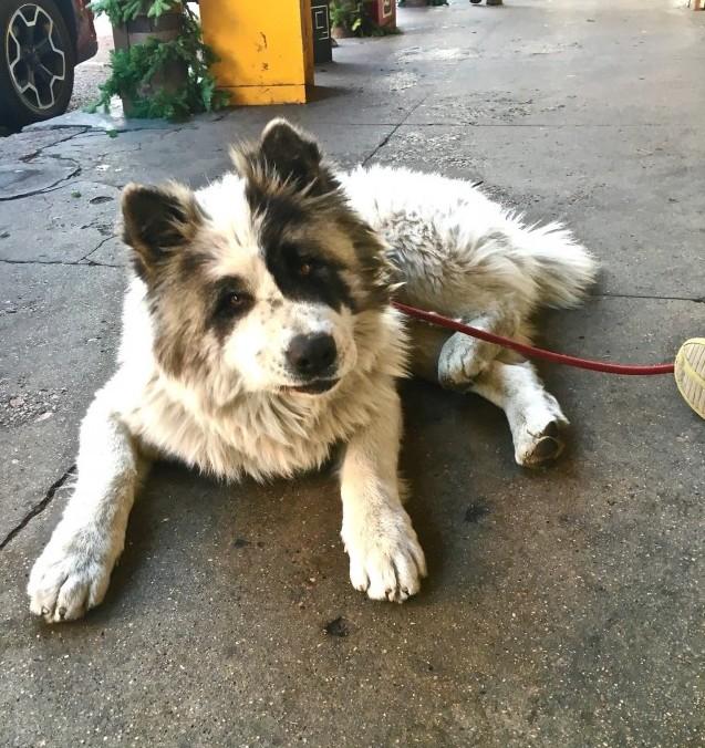 Santa Fe dog