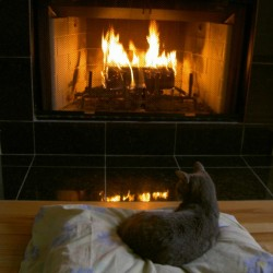 Harvey resting in front of fire